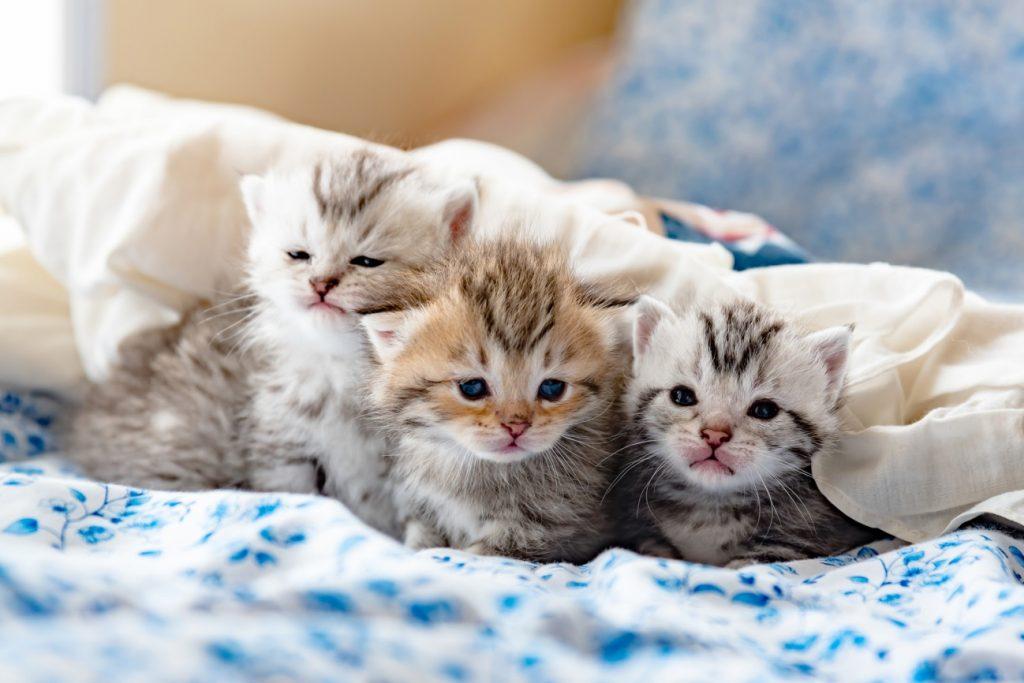 ネコの手 は仕事にも有効 集中力を上げたいならネコを見ろ 一般
